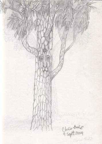 pine_elftree1