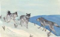 tres-lobos
